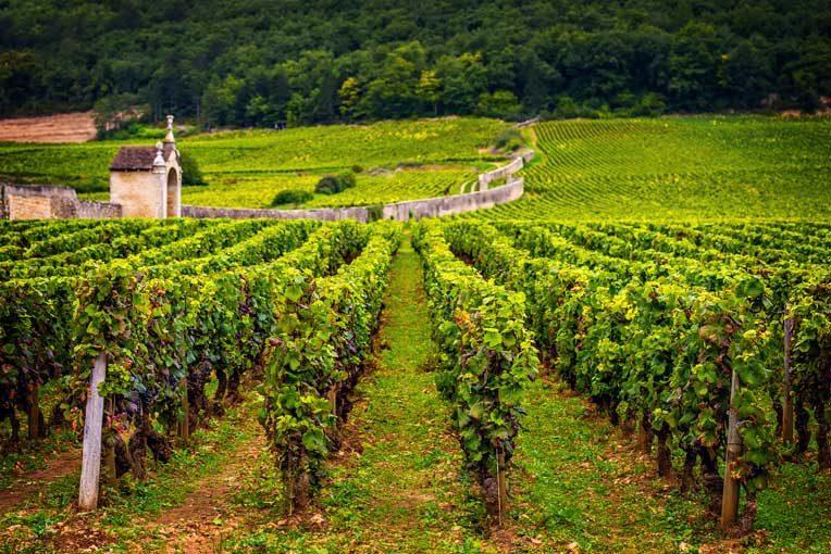 Bio im Bordeaux