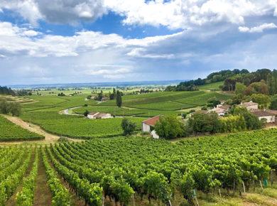 Klein aber fein - Weingut Château la Voûte