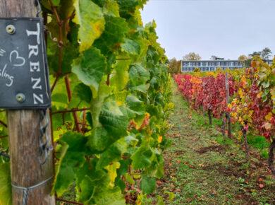 Weingut Trenz im Rheingau